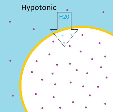 Hypotonic solution outside a cell