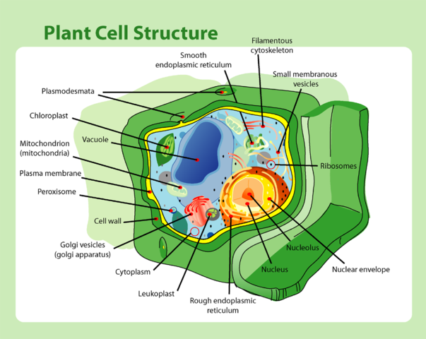 Plant cell wall function structure composition video lesson a plant cell has a cell wall whereas an animal cell only has a cell membrane ccuart Choice Image