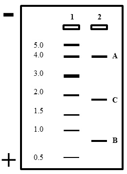 A biology question about insulin and DNA?