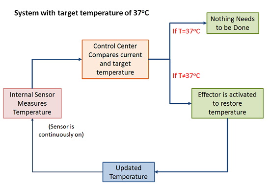 Example of a control system regulating body temperature kH8IcyTL