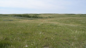 Temperate Grassland Biome: Climate, Plants, Animals & Locations ...