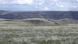 temperate grassland biome climate plants animals
