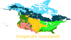 Temperate Grassland Biome Climate Plants Animals Locations - Biomes map of the us