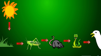 What Is A Food Chain Examples Overview Video Lesson