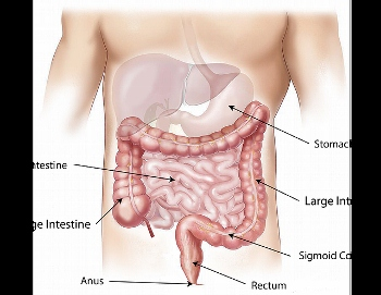 Mesentery medical definition function study abdominal cavity ccuart Images