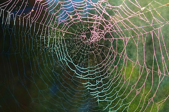 Cobweb Messages in Charlotte\'s Web | Study.com