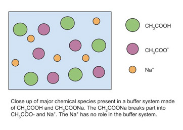 Buffer System in Chemistry: Definition & Overview - Video & Lesson ...