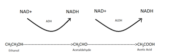 acetic acid formation