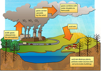 Causes & Effects of Acid Rain: Lesson for Kids   Study.com