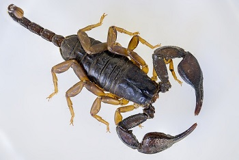 image of a scorpion