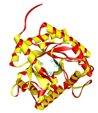 Aldolase enzyme and active site