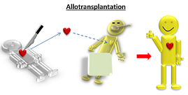allotransplantation