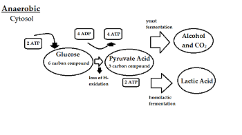 what is respiration definition process & equation video  : anaerobic respiration diagram - findchart.co