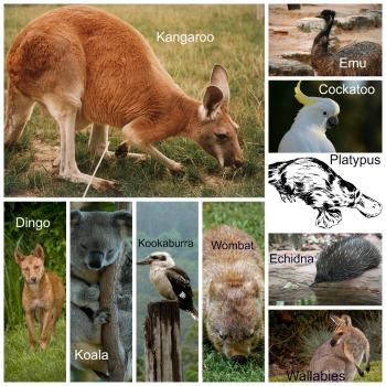 pictures of australian animals