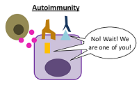 Immune system fights the body in autoimmunity