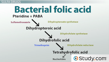 diagram of folic acid synthesis in bacteria