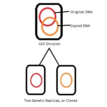 cloning term paper This sample animal cloning research paper is published for educational and informational purposes only if you need help writing your assignment, please use our.