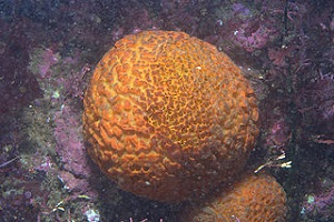 Sea Sponge Lesson for Kids | Study.com