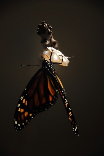 butterfly, transformation, the journey, mary oliver