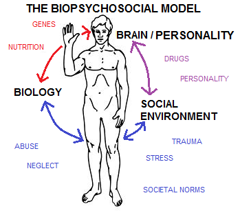 health psychology and the biopsychosocial model What exactly is a biopsychosocial approach to health  one example of  psychological factors impacting health includes heart disease hostility has  become.