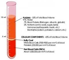 What Is Blood Plasma? - Function & Components - Video & Lesson ...