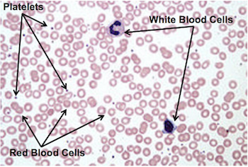 Cells of Blood