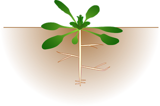 Plant Anatomy Lesson for Kids | Study.com