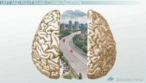 Brain Hemispheres Communicate