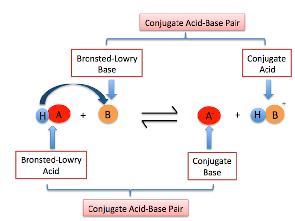 BronstedLowry Base Definition Examples Video Lesson – Conjugate Acid Base Pairs Worksheet