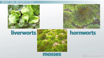 Bryophytes: definition, types, characteristics & examples video.