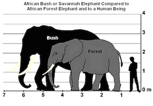 similarities between african and asian elephants