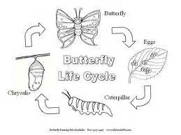 line drawing of the life cycle of a butterfly