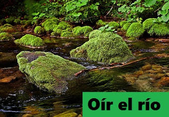 Oir Conjugation: Present Tense & Subjunctive   Study.com