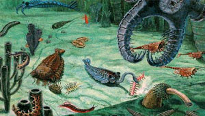 Perfect Cambrian Explosion