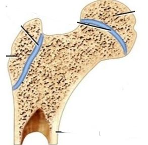 Identify Each Of The Following Using The Pictures Below Synchondrosis Symphysis Study Com A synchondrosis (joined by cartilage) is a cartilaginous joint where bones are joined together by a synchondrosis may be temporary or permanent. study com
