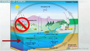 Carbon Can Enter Ocean