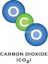 Define carbon dating biology
