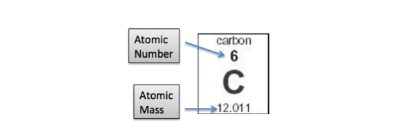 What are isotopes definition types examples video lesson this is because the atomic mass of carbon is based on the average atomic masses of its isotopes and the abundance of each isotope urtaz Choice Image