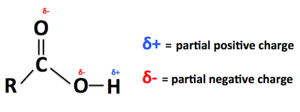 Carboxylic Acid Structural Formula Properties Uses Video