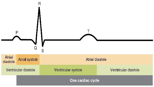 Diagram of the heart cycle