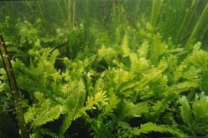 Ocean Plants Lesson for Kids   Study.com