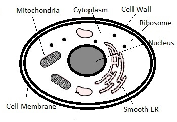 Ribosomes inside the Cell
