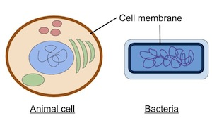 Why is the cell membrane important video lesson transcript cell membranes ccuart Images