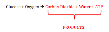 respiration cellular cell equation reactants chemical atp study water dioxide carbon which