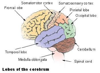 Cerebral Ischemic Stroke | Study.com