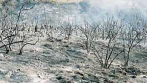 Chaparral Ecosystem After Fire
