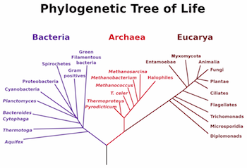 Archaea & Bacteria: Similarities & Differences - Video & Lesson ...