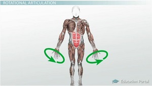 Circumduction Example