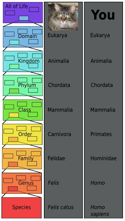 Carolus Linnaeus: Classification, Taxonomy & Contributions to ...