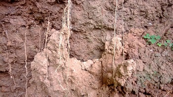 types of soil clay